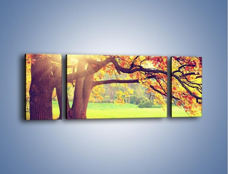 Obraz na płótnie – Jesienią w parku też jest pięknie – trzyczęściowy KN967W5