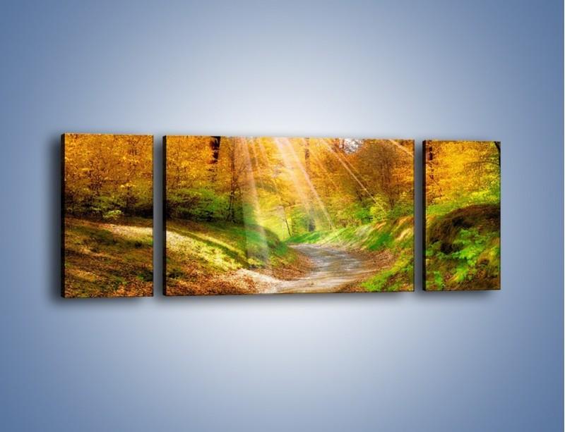 Obraz na płótnie – Promienną i słoneczną ścieżką przez las – trzyczęściowy KN989W5