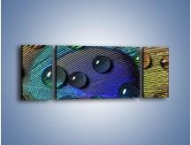 Obraz na płótnie – Kropelki na pawim oku – trzyczęściowy O047W5