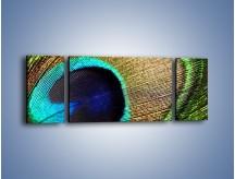 Obraz na płótnie – Cudowne pawie oko – trzyczęściowy O048W5