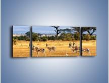 Obraz na płótnie – Antylopy w słonecznej afryce – trzyczęściowy Z003W5