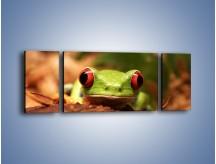 Obraz na płótnie – Bystre oczka małej żabki – trzyczęściowy Z023W5
