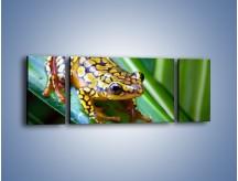 Obraz na płótnie – Kolorowy płaz na liściu – trzyczęściowy Z026W5