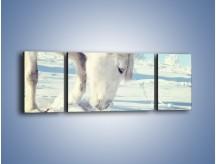 Obraz na płótnie – Arab w śnieżnym puchu – trzyczęściowy Z144W5