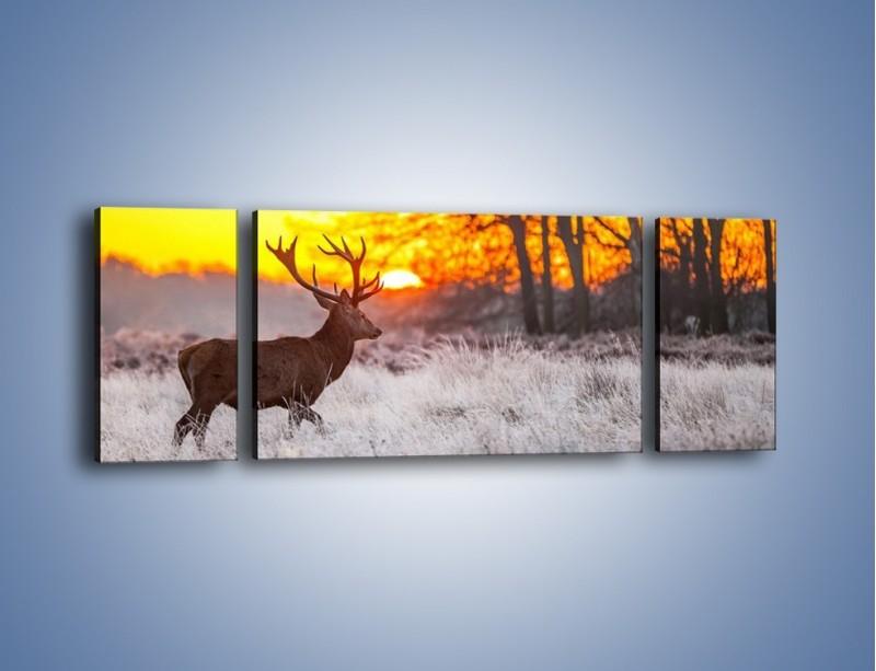 Obraz na płótnie – Jeleń o zachodzie słońca – trzyczęściowy Z164W5