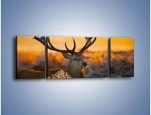 Obraz na płótnie – Ciężkie poroże jelenia – trzyczęściowy Z165W5