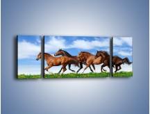 Obraz na płótnie – Galopujące stado brązowych koni – trzyczęściowy Z172W5