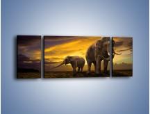 Obraz na płótnie – Ciekawość małego słonika – trzyczęściowy Z212W5