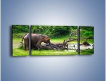 Obraz na płótnie – Kąpiel ze słoniem – trzyczęściowy Z216W5