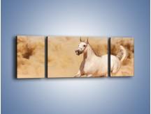 Obraz na płótnie – Klacz w tumanach piasku – trzyczęściowy Z233W5