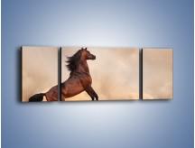 Obraz na płótnie – Koń na warcie – trzyczęściowy Z234W5