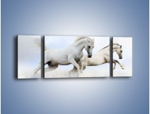 Obraz na płótnie – Białe konie i biały śnieg – trzyczęściowy Z239W5