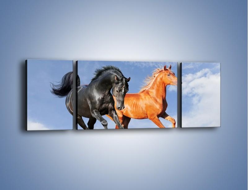 Obraz na płótnie – Czarny rudy i koń – trzyczęściowy Z241W5