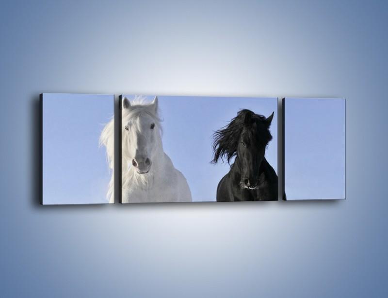 Obraz na płótnie – Czarno-biały wyścig konny – trzyczęściowy Z263W5