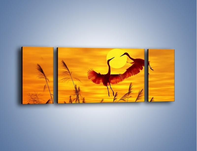 Obraz na płótnie – Czaple i zachód słońca – trzyczęściowy Z302W5