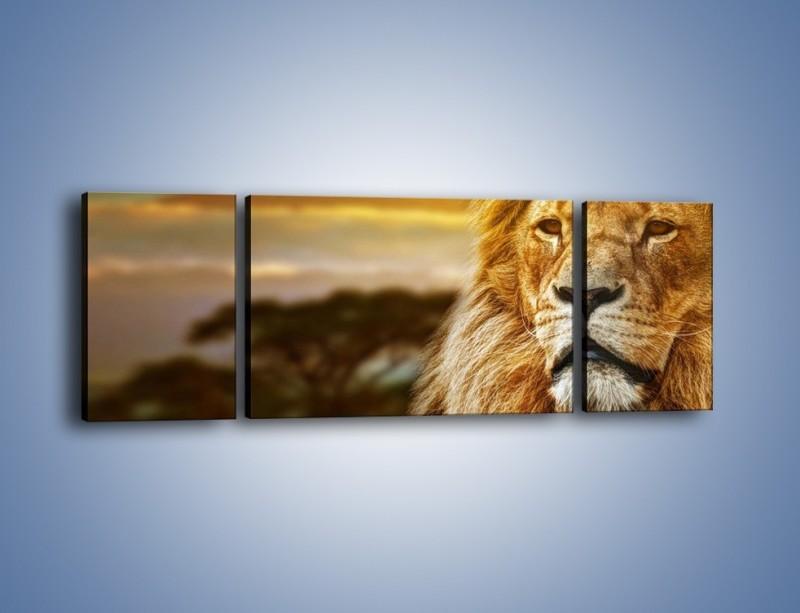 Obraz na płótnie – Dojrzały wiek lwa – trzyczęściowy Z303W5
