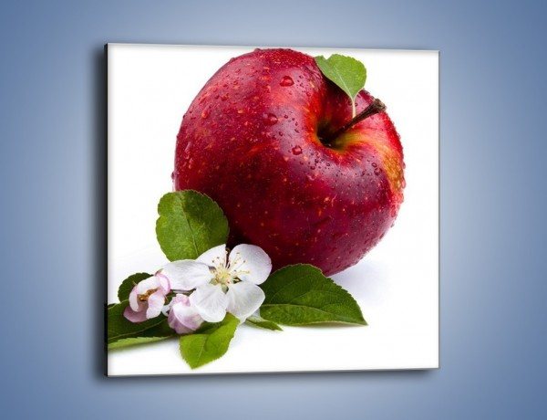 Obraz na płótnie – Polskie zdrowe jabłko – jednoczęściowy kwadratowy JN102