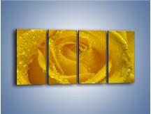 Obraz na płótnie – Zmoczone brzegi płatków – czteroczęściowy K1022W1