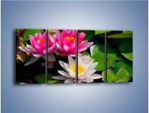 Obraz na płótnie – Pływające kwiaty – czteroczęściowy K392W1