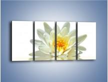 Obraz na płótnie – Biel z pomarańczą w kwiecie – czteroczęściowy K674W1