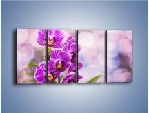 Obraz na płótnie – Storczyk i fioletowe tło – czteroczęściowy K863W1