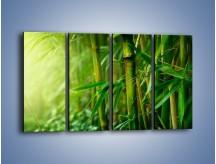 Obraz na płótnie – Bambus w roli głównej – czteroczęściowy KN1202AW1