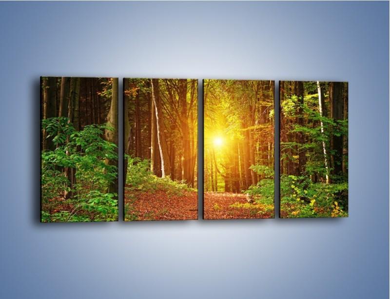 Obraz na płótnie – Polski krajobraz leśny – czteroczęściowy KN1257AW1