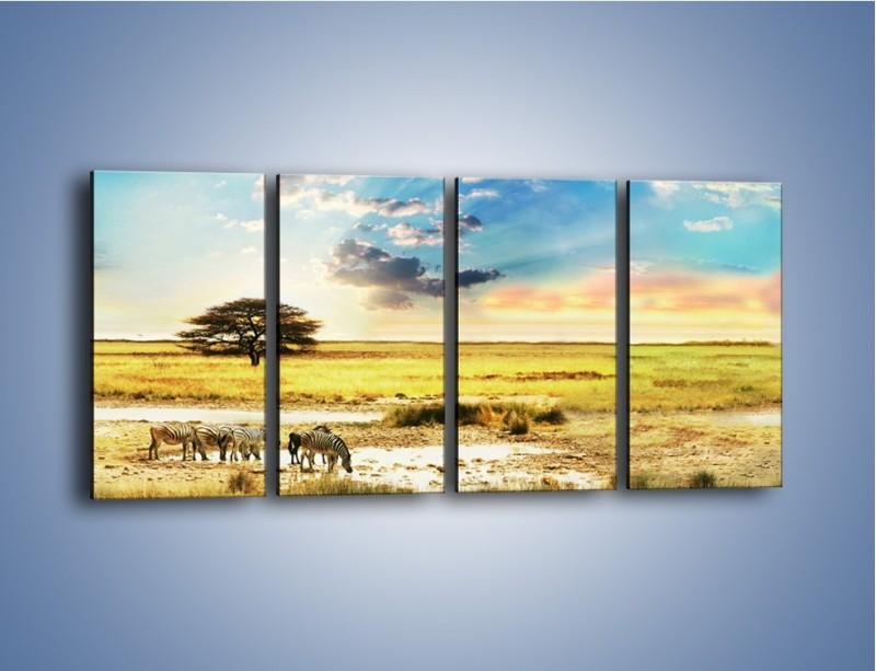 Obraz na płótnie – Zebry na sawannie – czteroczęściowy KN1298AW1