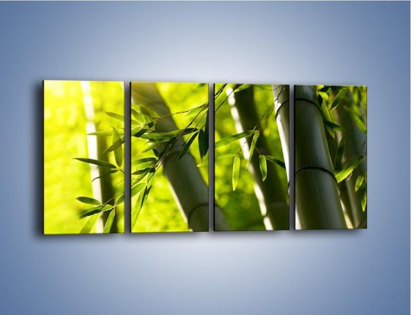Obraz na płótnie – Twarde łodygi bambusa – czteroczęściowy KN1314AW1