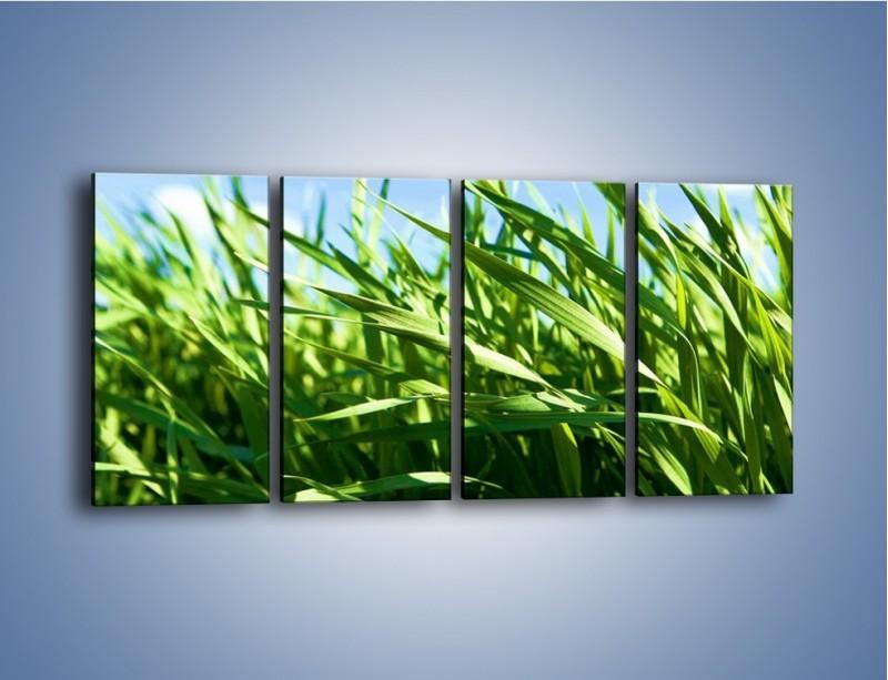 Obraz na płótnie – Wiatr w łodygach – czteroczęściowy KN176W1