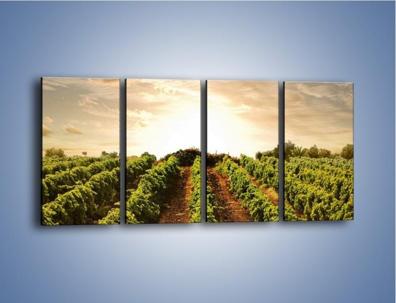 Obraz na płótnie – Spacer między uprawami – czteroczęściowy KN227W1