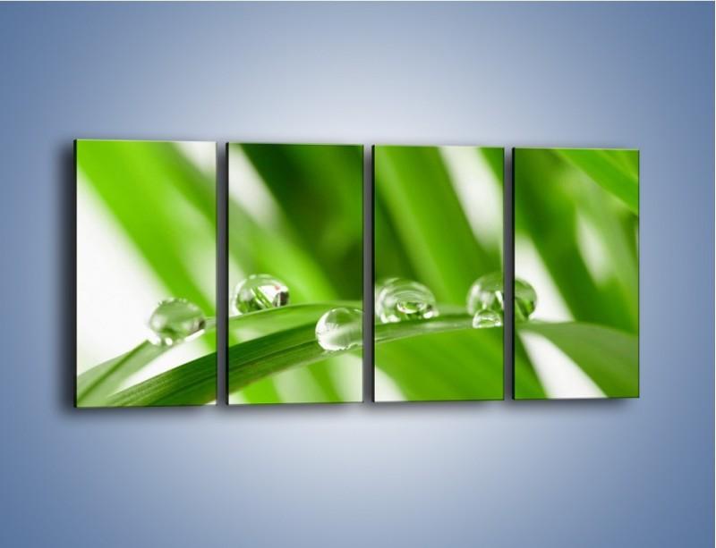Obraz na płótnie – Krople rosy na liściu – czteroczęściowy KN339W1