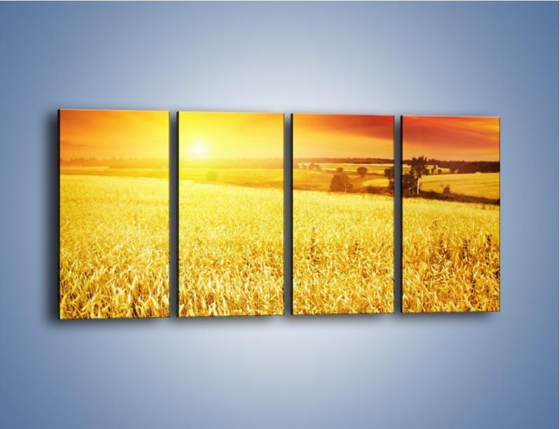 Obraz na płótnie – Zboże złote jak słońce – czteroczęściowy KN398W1