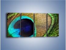 Obraz na płótnie – Cudowne pawie oko – czteroczęściowy O048W1
