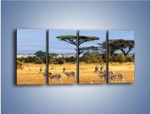 Obraz na płótnie – Antylopy w słonecznej afryce – czteroczęściowy Z003W1