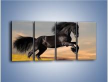 Obraz na płótnie – Czarny koń w galopie – czteroczęściowy Z008W1