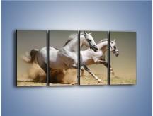 Obraz na płótnie – Białe konie w pustynnym galopie – czteroczęściowy Z055W1