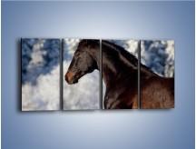 Obraz na płótnie – Brązowy ogier na zimowym spacerze – czteroczęściowy Z056W1