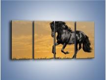 Obraz na płótnie – Bieg z koniem po polanie – czteroczęściowy Z057W1