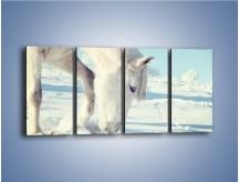 Obraz na płótnie – Arab w śnieżnym puchu – czteroczęściowy Z144W1