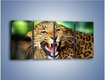 Obraz na płótnie – Jaguar z pazurem – czteroczęściowy Z184W1
