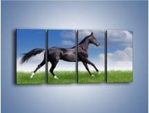 Obraz na płótnie – Dziki koń w biegu – czteroczęściowy Z194W1