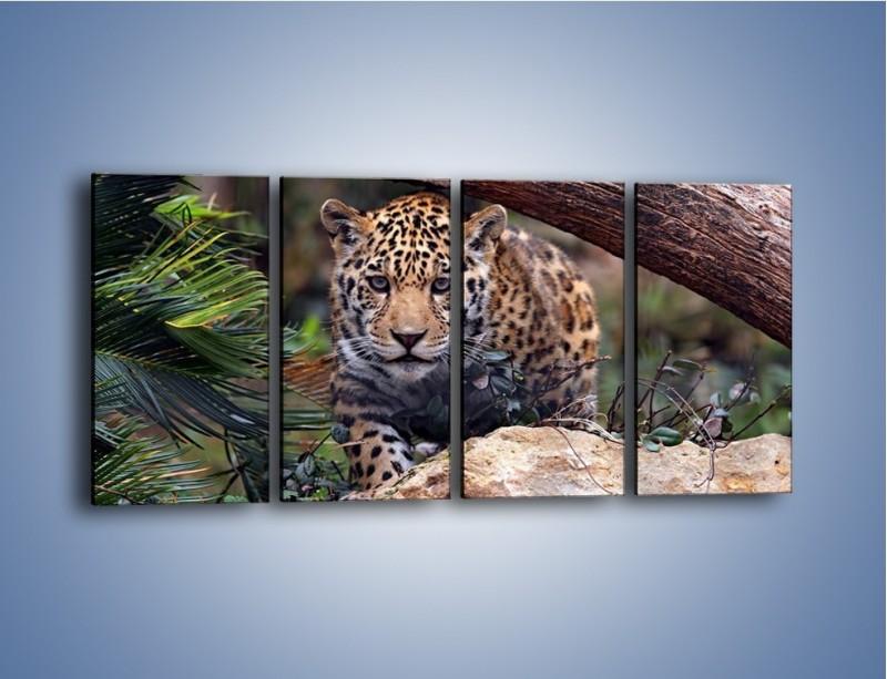 Obraz na płótnie – Jaguar w gotowości – czteroczęściowy Z198W1