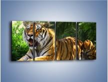 Obraz na płótnie – Cała duma tygrysa – czteroczęściowy Z199W1