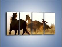 Obraz na płótnie – Cowboy wśród koni – czteroczęściowy Z206W1