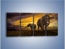Obraz na płótnie – Ciekawość małego słonika – czteroczęściowy Z212W1