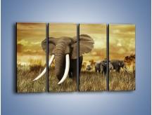 Obraz na płótnie – Drogocenne kły słonia – czteroczęściowy Z214W1