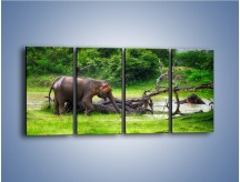Obraz na płótnie – Kąpiel ze słoniem – czteroczęściowy Z216W1