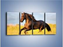 Obraz na płótnie – Dziki koń i jego mięśnie – czteroczęściowy Z232W1