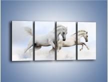 Obraz na płótnie – Białe konie i biały śnieg – czteroczęściowy Z239W1